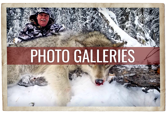 Timber King Outfitting Photo Galleries
