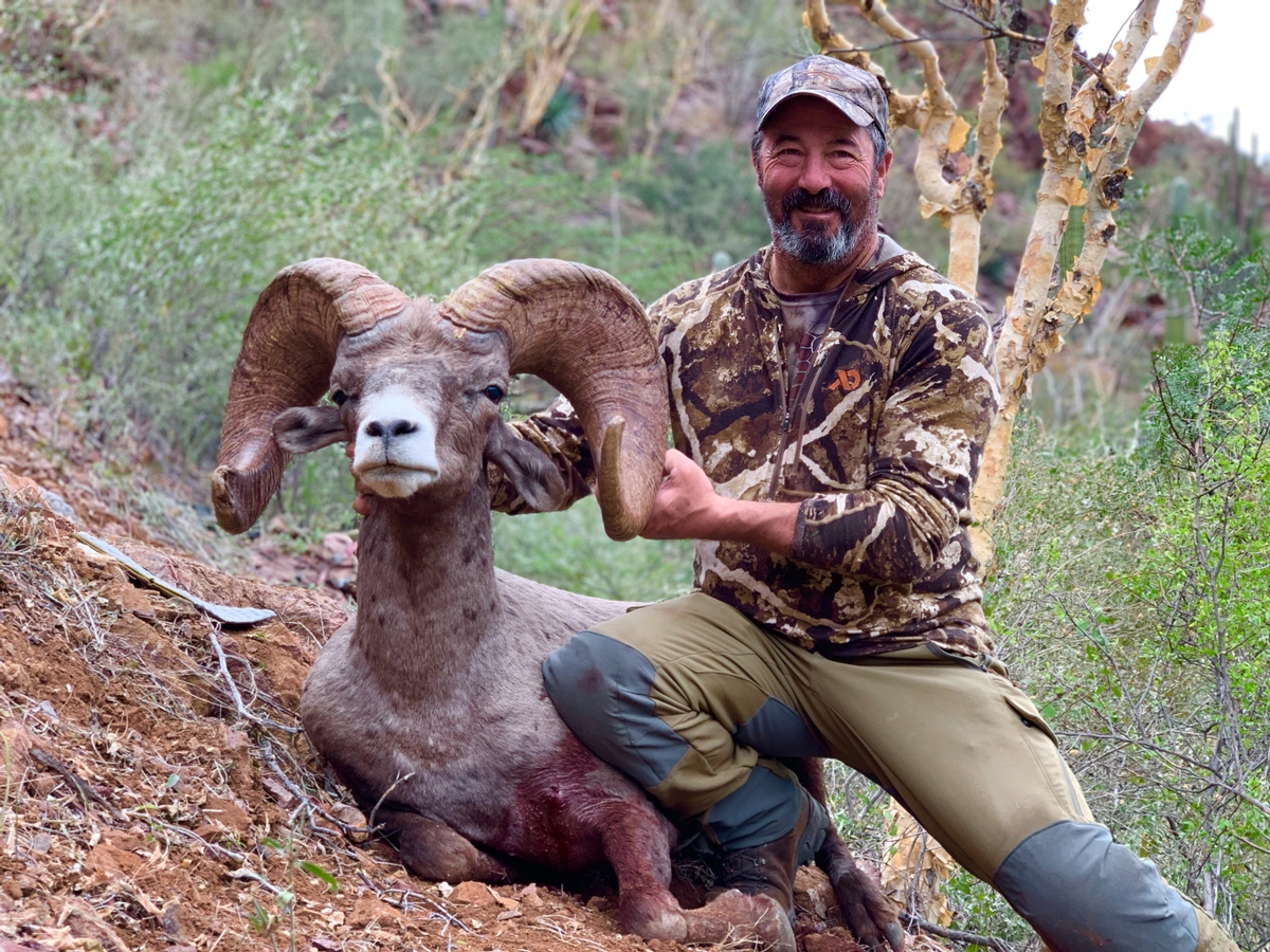 Guided Sheep Hunts in Mexico